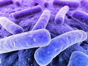 nitrificerende bacteriën in de vijver