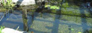 bacterien vijver helder water