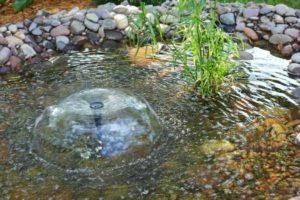 waterkwaliteit van de vijver