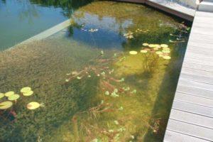 waterkwaliteit: zuurstofplanten, micro-organismen, vissen